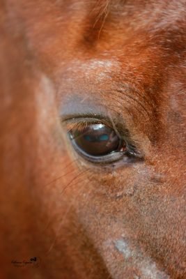 Horse photography and animals portraits outdoors and at your home